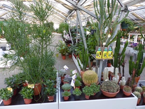 indoor pflanzen pflanzenmarkt bohnsdorf. Black Bedroom Furniture Sets. Home Design Ideas